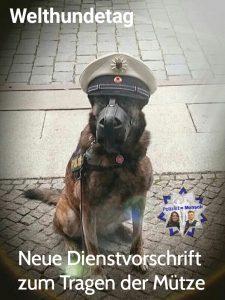 Welthundetag und neue PDV