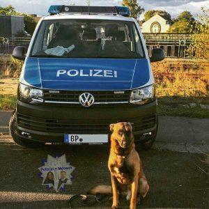 """Diensthund """"Schimanski"""""""