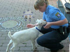 Polizei musste Ziege in doppelter Hinsicht retten