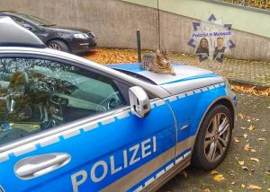 Bewerbung zur Polizeikatze (PK)