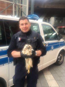 Bundespolizei rettet verletzten Greifvogel von Gleisanlage