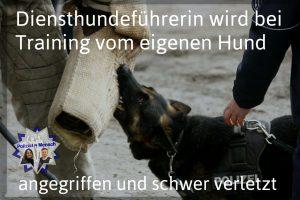 Diensthundeführerin wird bei Training vom eigenen Hund angegriffen und schwer verletzt