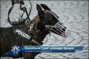 """Diensthund """"Lord"""" schnappt Sprayer auf der Flucht"""