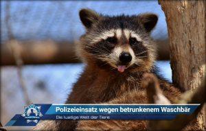 Die lustige Welt der Tiere: Polizeieinsatz wegen betrunkenem Waschbär