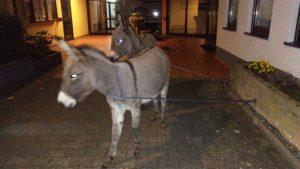 Esel in Gewahrsam genommen