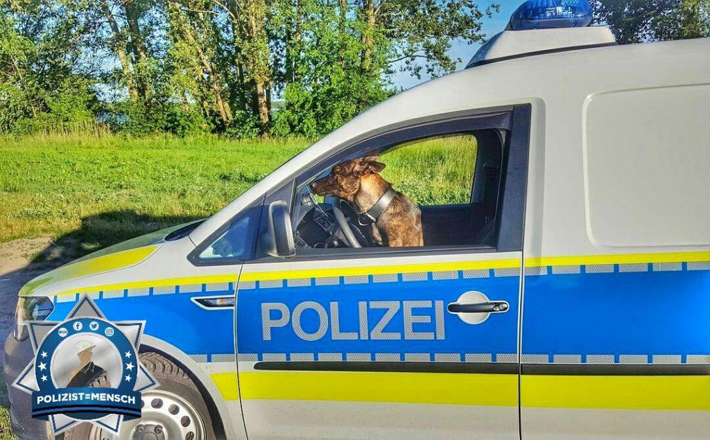 Selbstfahrer ist der Diensthund