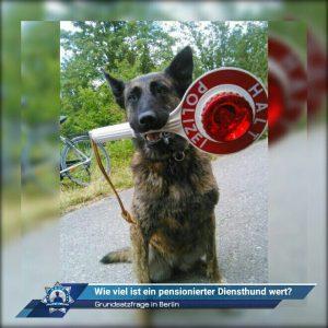 Grundsatzfrage in Berlin: Wie viel ist ein pensionierter Diensthund wert?