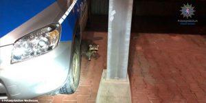 """Fahndung: Maskierter Täter """"überfällt"""" Polizeistation, begeht Mundraub und flüchtet"""
