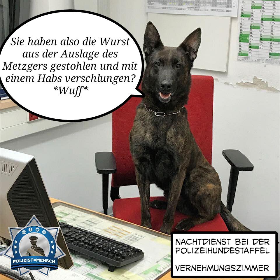 Diensthund Nacho bei der Arbeit