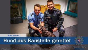 Erleichterung auf beiden Seiten: Hund vor dem Ertrinken gerettet