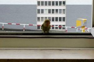 Papagei fordert lautstark Einlass bei der Polizei