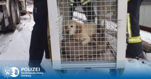 Wasserschutzpolizei und Feuerwehr retten Hund vor dem Erfrierungstod auf einem Schiff