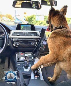 """""""Ein herrenloser Hund wurde aufgegriffen und durfte bei uns eine Spritztour mitmachen, bis für ihn eine Bleibe gefunden wurde  Gruß Tobias"""""""