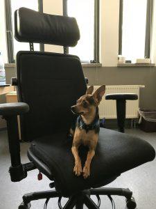 Polizisten retten Hunde aus überhitzten Fahrzeugen