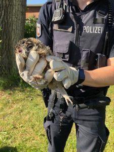 Polizisten rettet jungen Waldkauz vor Krähenattacke