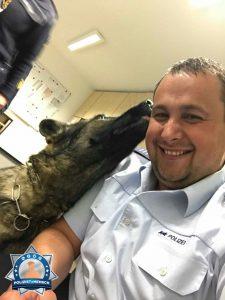 Gute Nacht Kuss vom Polizeihund