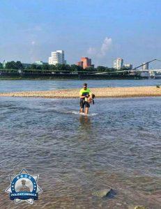 Verletztes Schaf von Rheininsel gerettet