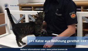 Polizisten befreien ausgehungerte Katze aus Wohnung