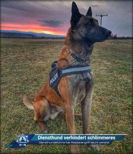 Diensthundeführer bei Messerangriff leicht verletzt: Diensthund verhindert schlimmeres