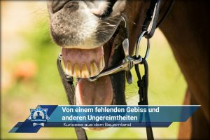 Kurioses aus dem Bayernland: Von einem fehlenden Gebiss und anderen Ungereimtheiten