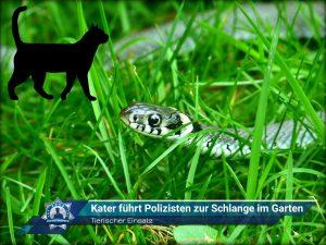 Tierischer Einsatz: Kater führt Polizisten zur Schlange im Garten