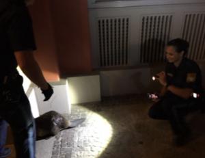 """Auf den Biber gekommen: Polizisten helfen dem Nager zurück ins eigene """"Revier"""""""