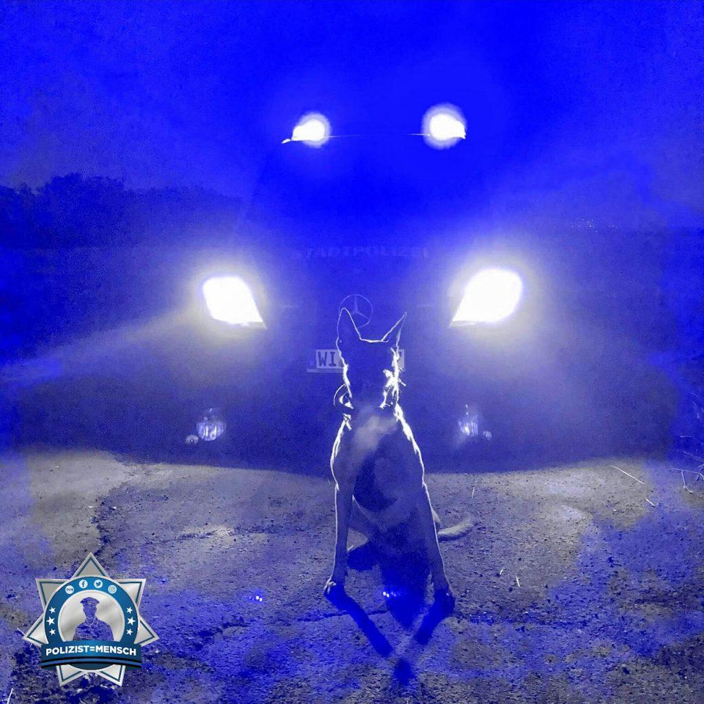 """""""Ich passe auf euch auf! Don, Diensthund der Stadtpolizei Wiesbaden."""""""