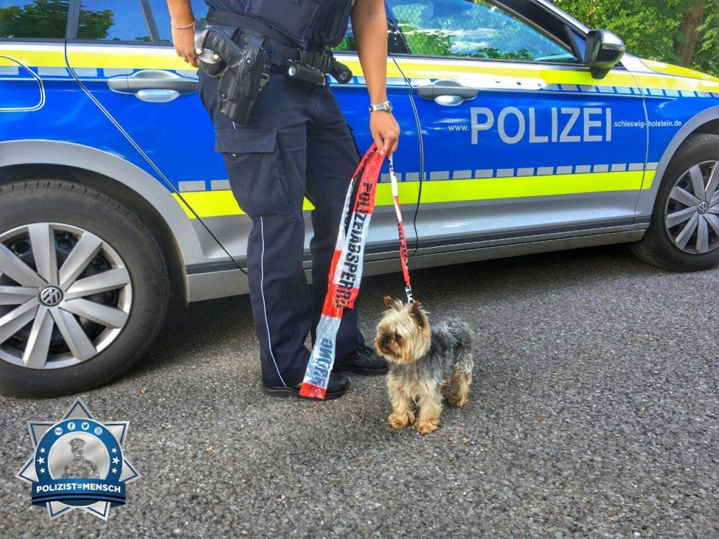 """""""Neue Diensthunde und neues Hundeführerzubehör (Leine) bei der Polizei.  Gruß vom Tagesdienst in Geesthacht (Schleswig-Holstein), Raphael"""""""