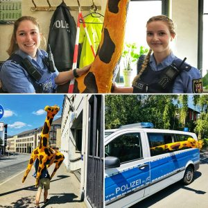"""Ungewöhnliche """"Tierrettung"""": Giraffe lag auf der Straße"""