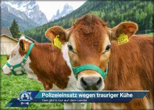 Das gibt's nur auf dem Lande: Polizeieinsatz wegen trauriger Kühe