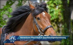 Zum Augenreiben: Herrenloses Pferd läuft in Geschwindigkeitsmessung