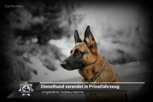 Ungeklärte Todesursache: Diensthund verendet in Privatfahrzeug