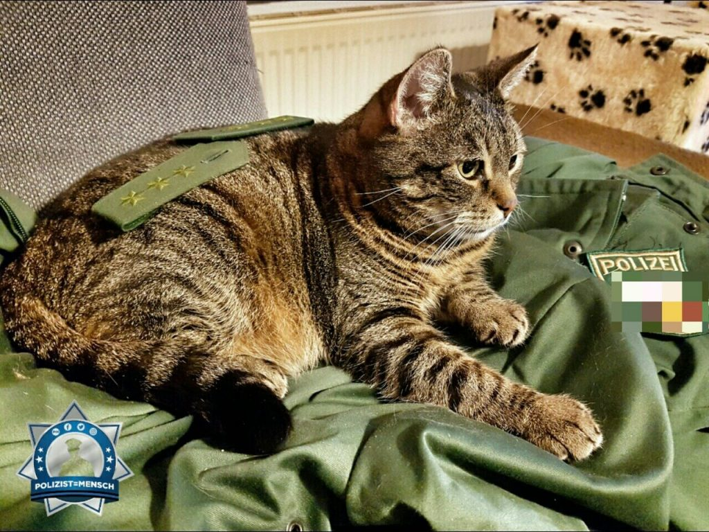 Am Weltkatzentag setzt sich natürlich die Katze durch