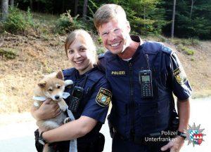 Nach Verkehrsunfall handeln Ersthelfer vorbildlich: Polizisten kümmern sich um Hundewelpe