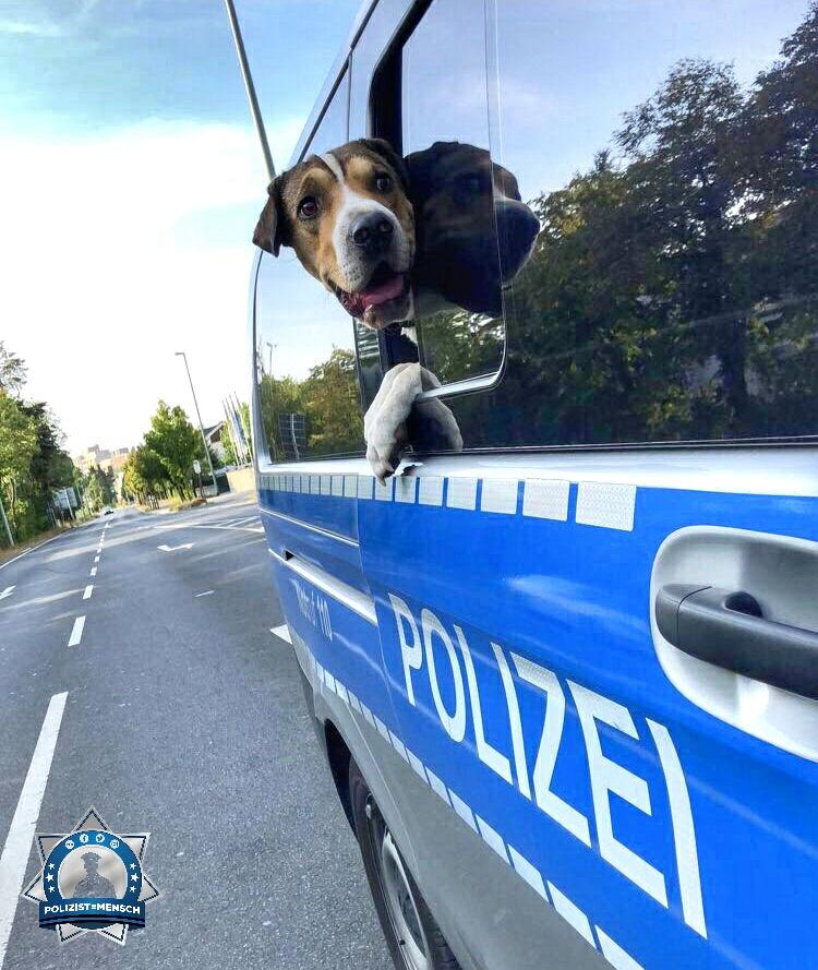 """""""Auch dem Fundhund war es bei den Temperaturen zu heiß im Auto, da brauchte er eine kühle Brise zum abkühlen. LG Johanna"""""""