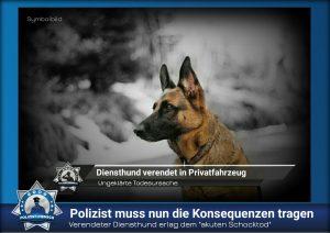 """Verendeter Diensthund erlag dem """"akuten Schocktod"""": Polizist muss nun die Konsequenzen tragen"""