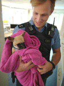 Tiermisshandler als Wiederholungstäter: Vernachlässigter Chihuahua beschlagnahmt und gerettet