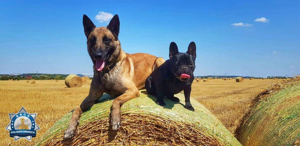 Polizeihund genießt mit Freundin das schöne Wetter