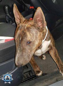 Herrenlosen Hund gefunden und an die Polizei übergeben