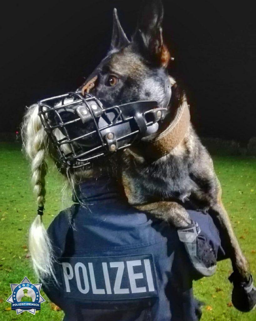 """""""Noch ein wenig Diensthundtraining am späten Abend. Liebe Grüße von Steffi und Schutz- und Rauschgiftspürhund Mieze"""""""