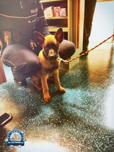 Polizeihundanwärter Wotan grüßt aus dem Nachtdienst