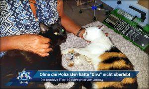 """Die positive (Tier-) Geschichte: Ohne die Polizisten hätte """"Diva"""" nicht überlebt"""