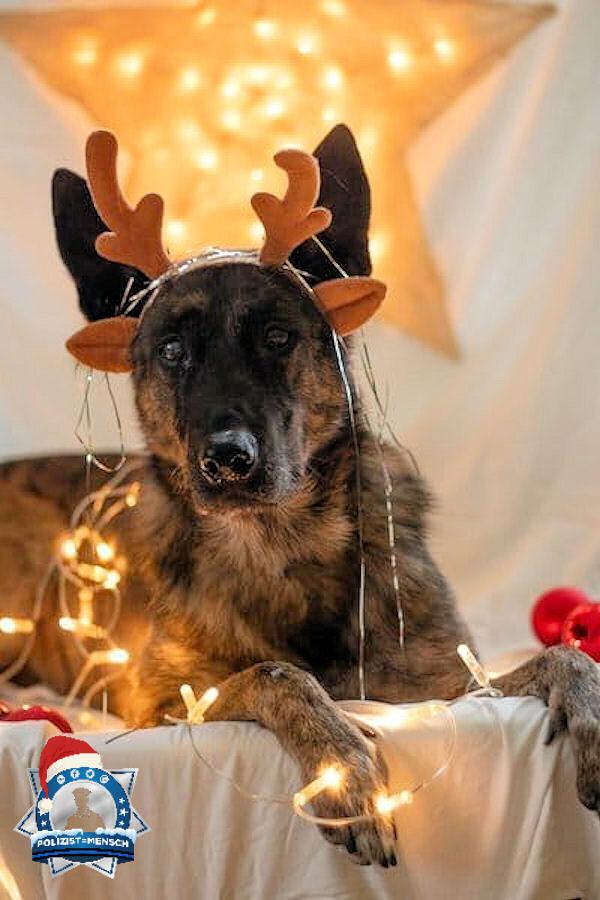 """""""Einen schönen 4. Advent von Diensthündin Freya und ihrer Diensthundeführerin."""""""