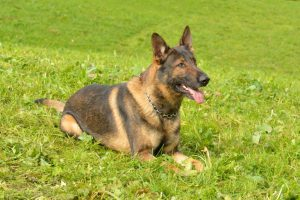 Auto, Alkohol und Käse gestohlen: Diensthund Capo erschnüffelt Einbrecher-Quartett