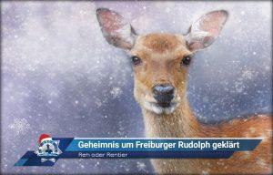 Reh oder Rentier: Geheimnis um Freiburger Rudolph geklärt