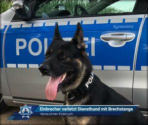 Versuchter Einbruch: Einbrecher verletzt Diensthund mit Brechstange