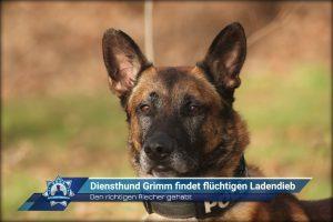 Den richtigen Riecher gehabt: Diensthund Grimm findet flüchtigen Ladendieb