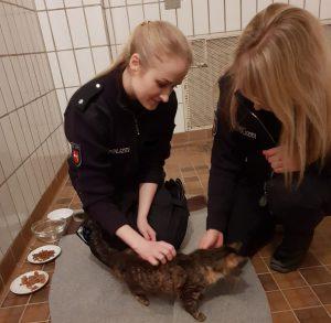 Eigentümer gesucht: Katze in Farbeimer vor Tierarztpraxis ausgesetzt