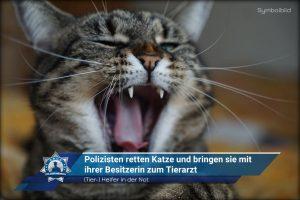 (Tier-) Helfer in der Not: Polizisten retten Katze und bringen sie mit ihrer Besitzerin zum Tierarzt