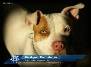 Überprüfung nicht bestanden: Hund greift Polizisten an